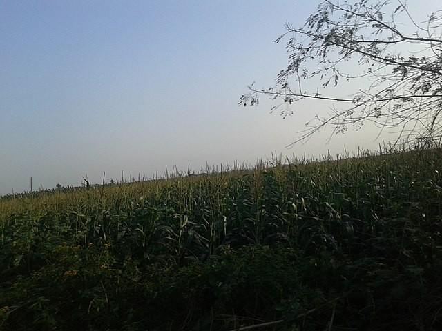 Nijgadh