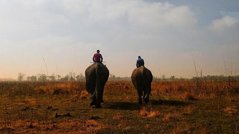 Shuklaphanta National Park.