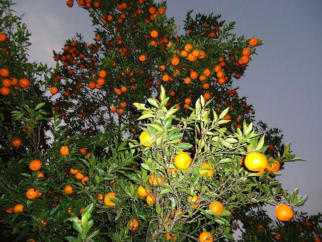 Orange Farm.