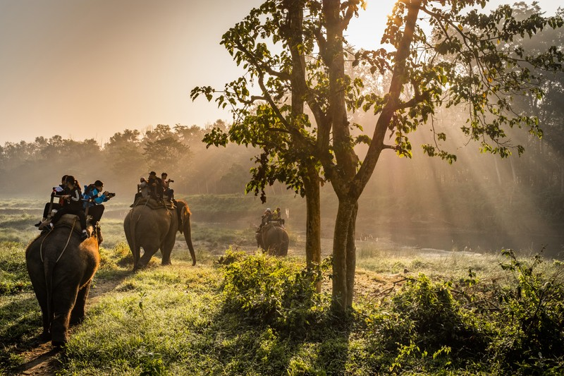 Chitwan Jungle Safari and Elephant Riding