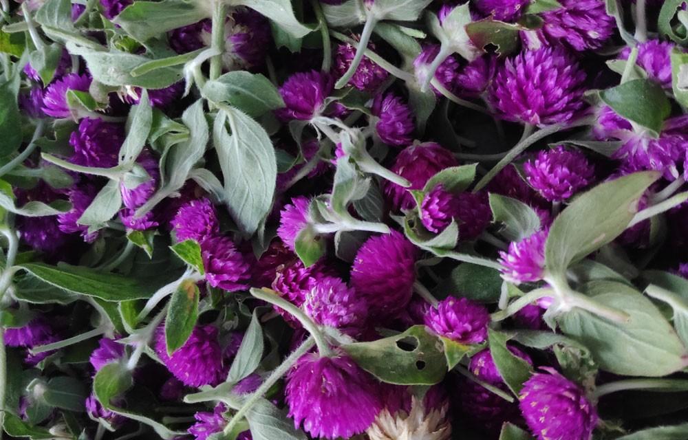 makhmali flower used in bhai tika tihar