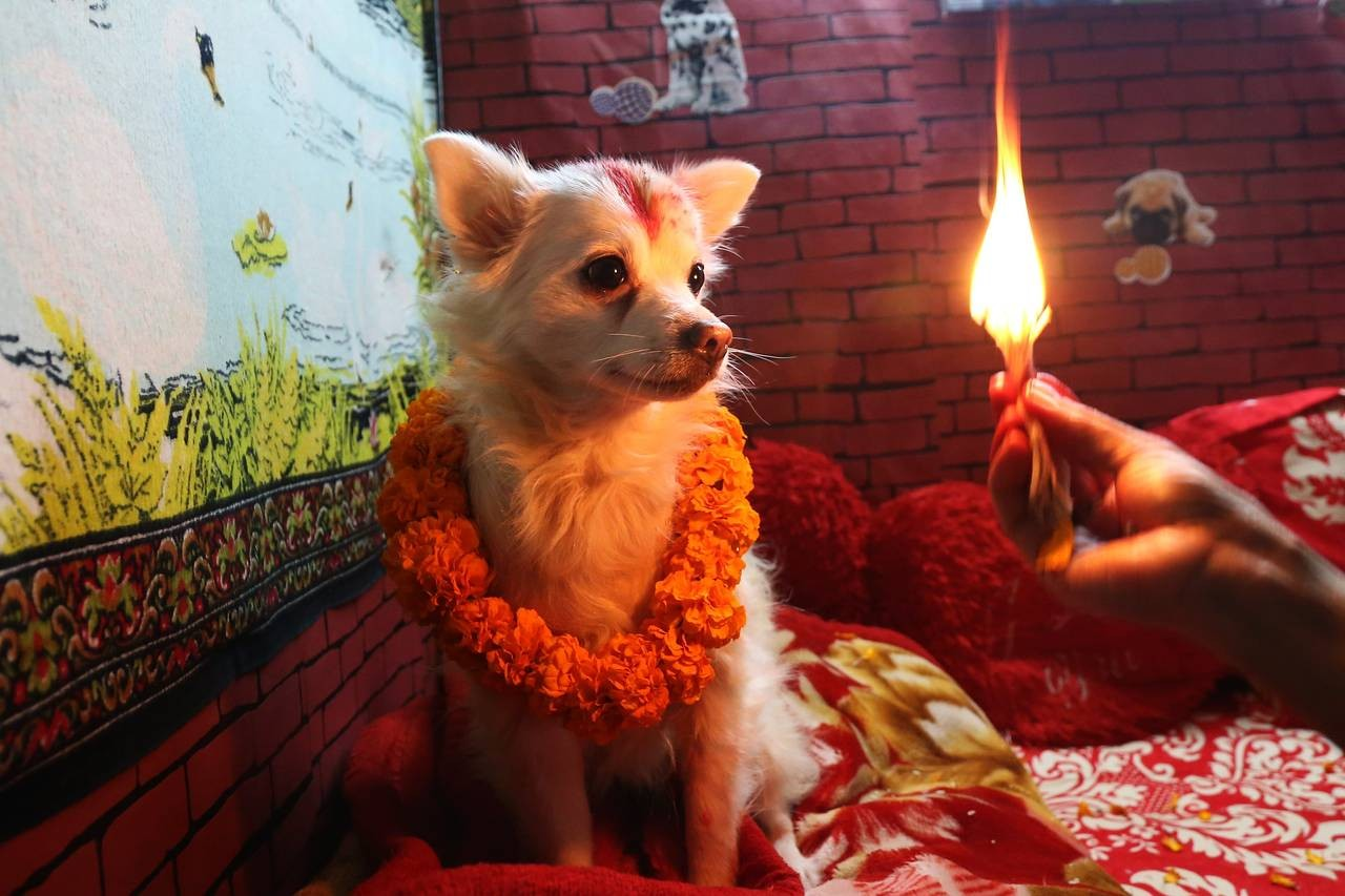 https://nepaltraveller.com/laravel-filemanager/photos/32/dogs.jpg